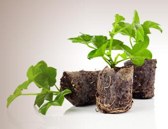 PLANTS & TREES RELOCATION